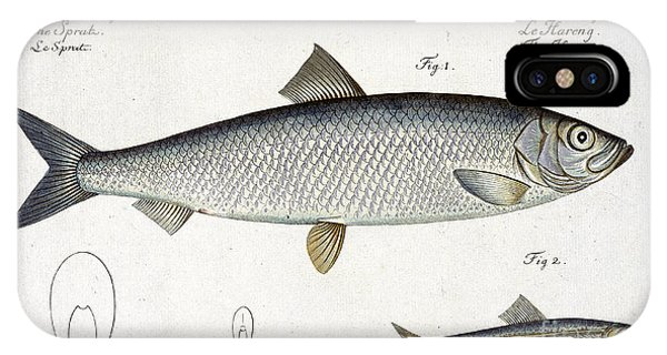 Ichthyology iPhone Case - Herring by Andreas Ludwig Kruger