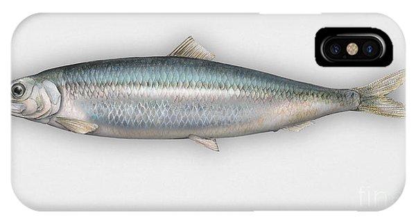 Herring  Clupea Harengus - Hareng - Arenque - Silakka - Aringa - Seafood Art IPhone Case