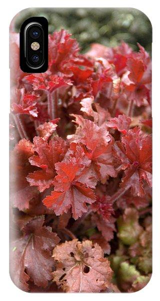 Cultivar iPhone Case - Heuchera 'marmalade' Leaves by Adrian Thomas