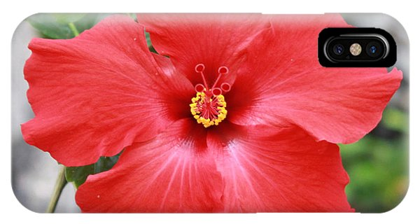 Hibiscus All Profit Go To Hospice Of The Calumet Area IPhone Case
