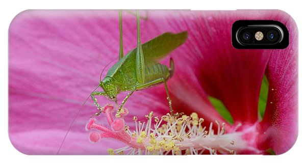 Hibiscus And Friend IPhone Case