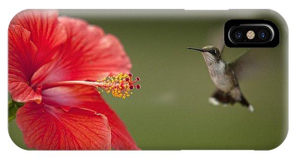 Hibiscus Hummingbird IPhone Case