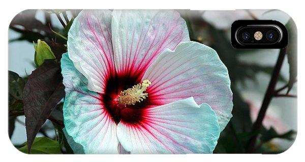 Hibiscus In Bloom IPhone Case