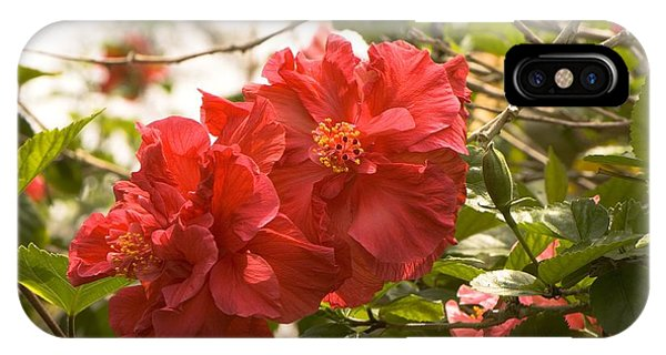 Hibiscus Rosa Sinensis Double Red Photograph By Adrian Thomas