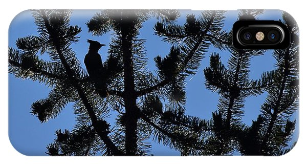 Hidden Bluejay In Silhouette Phone Case by Rich Rauenzahn