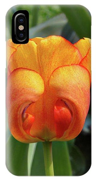 Hide-n-seek Tulip IPhone Case