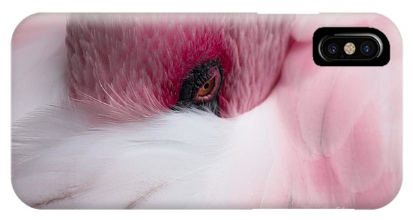 Hiding Flamingo IPhone Case