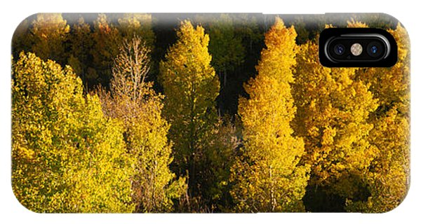 San Miguel iPhone Case - High Angle View Of Aspen Trees by Panoramic Images