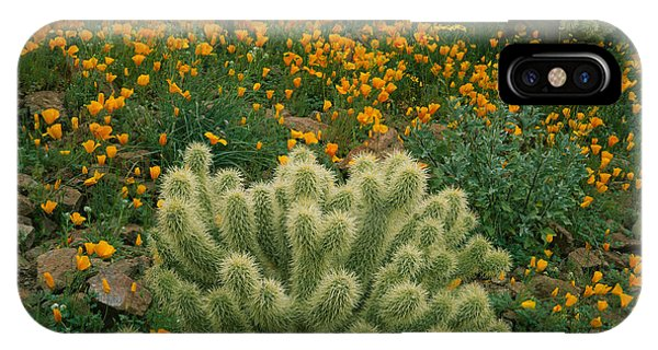 Opuntia Bigelovii iPhone Case - High Angle View Of Mexican Gold Poppies by Panoramic Images