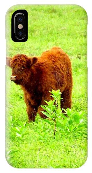 Highland Calf Phone Case by Dancingfire Brenda Morrell