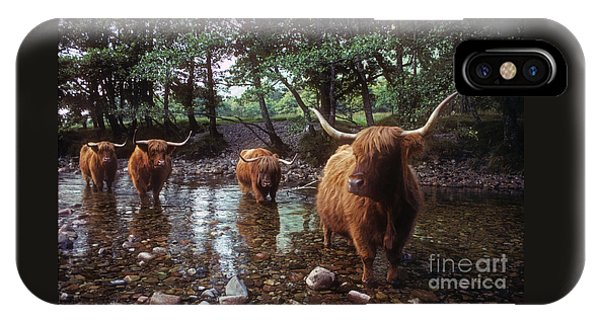 Highland Cattle In A Mountain Stream IPhone Case