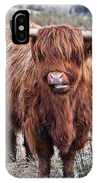 Highland Coo IPhone Case