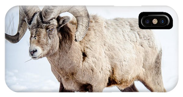 Big Horns On This Big Horn Sheep IPhone Case
