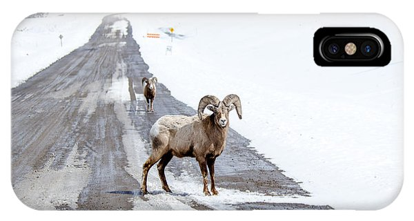 On The Road Again Big Horn Sheep  IPhone Case
