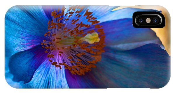 Himalayan Blue Poppy IIi IPhone Case