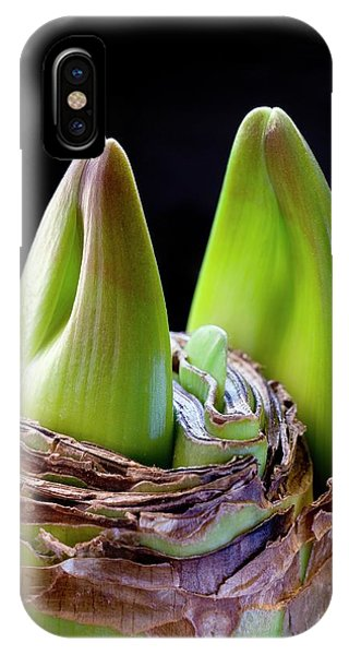 Hybrid iPhone Case - Hippeastrum Bulb Producing Flower Buds by Dr Jeremy Burgess