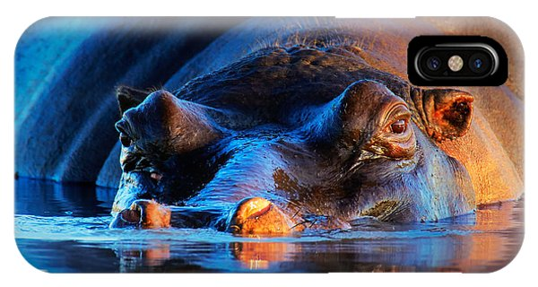 Safari iPhone Case - Hippopotamus  At Sunset by Johan Swanepoel