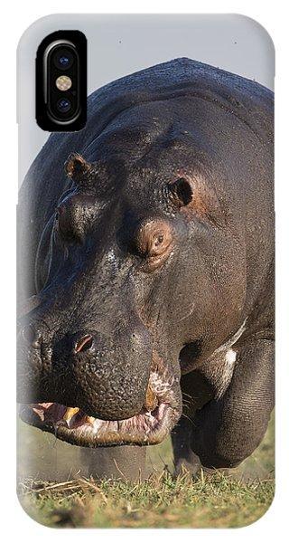 Hippopotamus Bull Charging Botswana IPhone Case