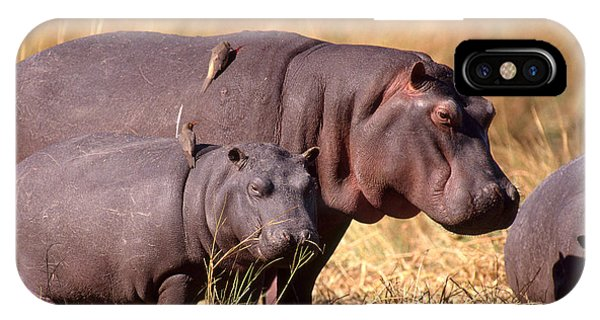 Hippopotamuses With Oxpeckers IPhone Case