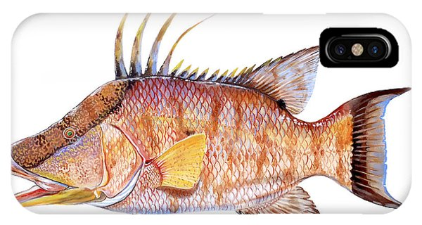 Trout iPhone Case - Hog Fish by Carey Chen