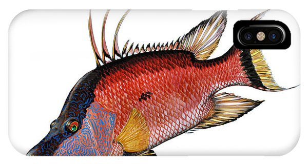 Hogfish On White IPhone Case