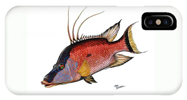IPhone Case featuring the painting Hogfish On White by Steve Ozment