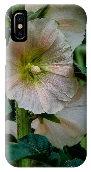 Holly Hock IPhone Case