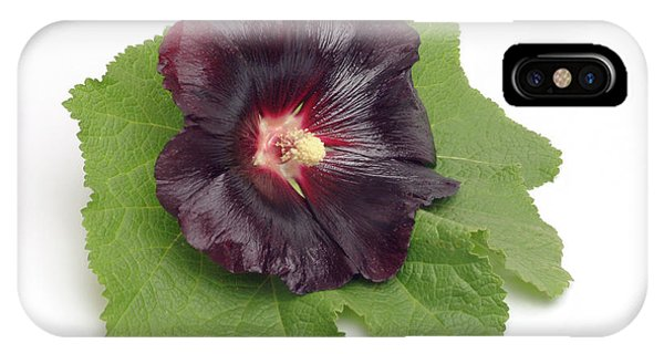 Hollyhock (alcea Rosea) Phone Case by Bildagentur-online/th Foto/science Photo Library