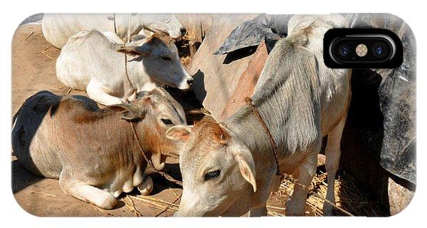 Holy Cows Odisha India IPhone Case