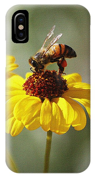 Honey Bee And Brittle Bush Flower IPhone Case