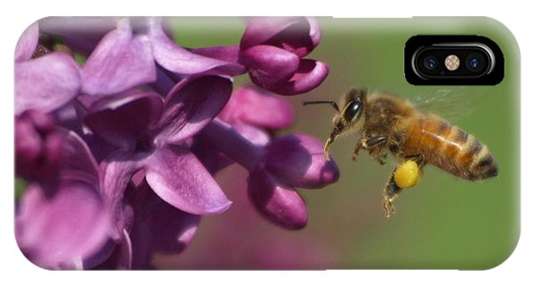 Honey Bee And Lilac IPhone Case