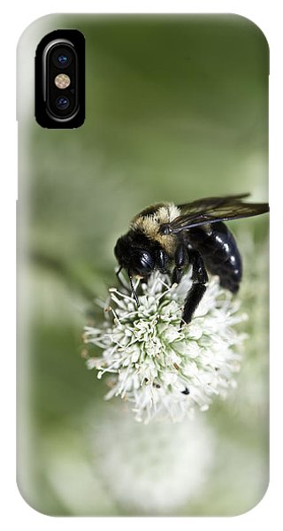 Honey Bee At Work IPhone Case
