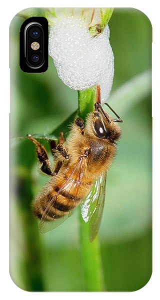 Cuckoo iPhone Case - Honey Bee Drinking From Cuckoo-spit by Dr. John Brackenbury