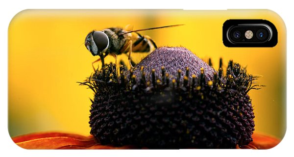 Pterygota iPhone Case - Honeybee On Orange Flower by Iris Richardson