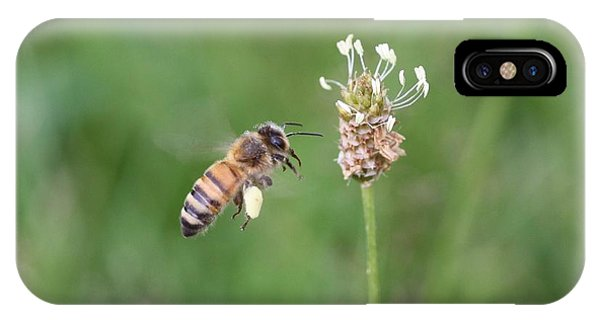 Honeybee And English Plantain IPhone Case
