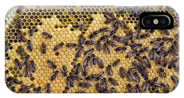 Honeybee iPhone X Case - Honeybee Brood Frame by Simon Fraser/science Photo Library
