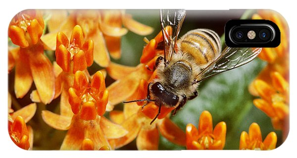 Pterygota iPhone Case - Honeybee by Larry West