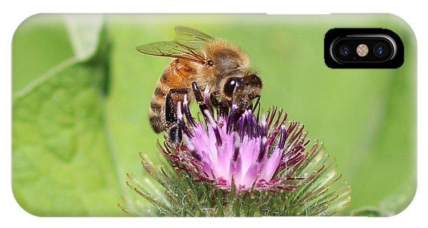 Honeybee On Burdock IPhone Case