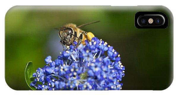 Honeybee iPhone X Case - Honeybee On California Lilac by Sharon Talson