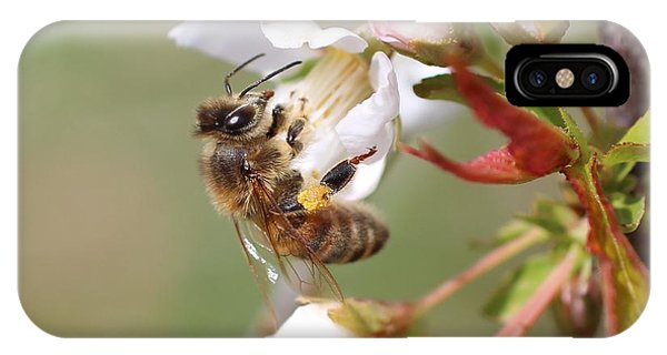 Honeybee On Cherry Blossom IPhone Case