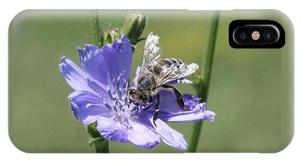 honeybee on Chickory IPhone Case