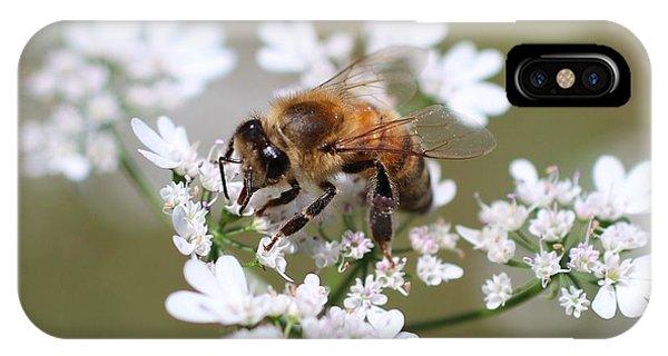 Honeybee On Cilantro IPhone Case