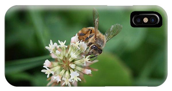 Honeybee On Clover IPhone Case