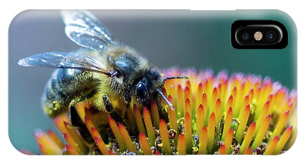 Honeybee iPhone X Case - Honeybee On Flower by Louise Murray/science Photo Library