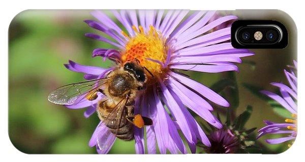 Honeybee On Purple Wild Aster IPhone Case
