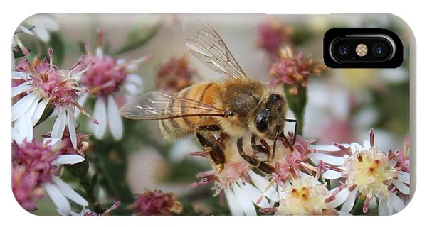Honeybee Sipping Nectar On Wild Aster IPhone Case