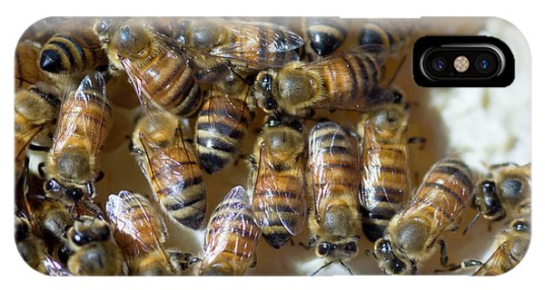 Honeybee iPhone X Case - Honeybees by Louise Murray/science Photo Library