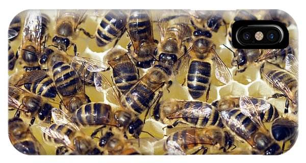 Honeybee iPhone X Case - Honeybees On Honeycomb by Simon Fraser/science Photo Library