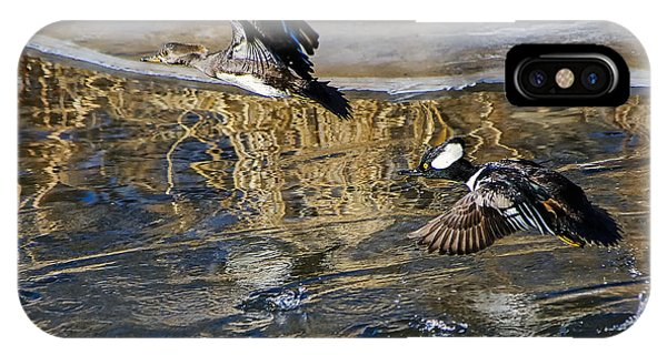 Hooded Merganser Ducks In Flight IPhone Case