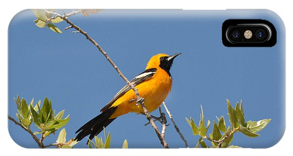 Hooded Oriole IPhone Case